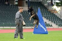 #Schutzhund / by ForDogTrainers.com