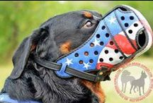 #Dog #Muzzles for any activity / Dear friends, in this board we would like to present you super comfortable muzzles for your dog. We are very happy for you if your pet is even-tempered and calm. You did a good job we have to say! However, there may be situations when this item of dog equipment is necessary. Please, look at models of muzzles, click on the picture, you like, and make your order! / by ForDogTrainers.com