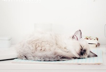 ANIMALS // CATS / by Catha