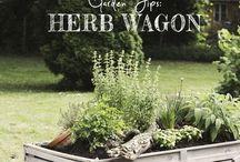 Herbs / by Susan Kraner