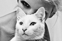 Glamour Puss... / by Maegan Tintari | ...love Maegan