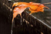 Falling Leaves / by Anita Crisp