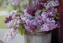 Lilacs / by Anita Crisp