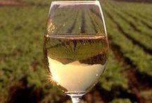 * Wine! / by Marie-José Ploeger-Koppers