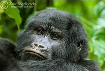 Primates of Africa / by Africa Geographic