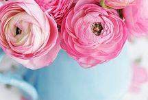 flower / by Derya Solmaz