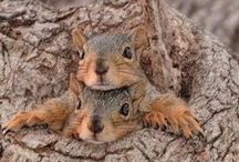 I love squirrels!! / by Jewel Horn