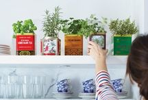 home // houseplants / by Aileen Kim