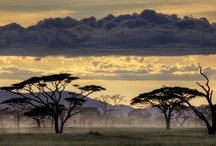 Out of Africa / by Jackie Albasini