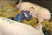 2013 Pennsylvania Farm Show / by Reading Eagle