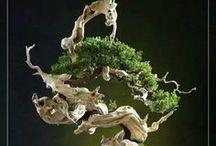 Art of Bonsai / by King Pin