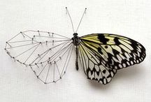 Butterfly & Wing Art / by Laura Campbell