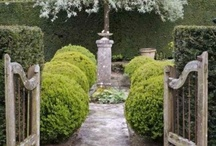 Landscaping/Pools/Courtyards / by Interiors 360 Lisa Springer