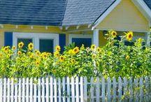 A Trip down Sunflower Lane...Sunflower Cottage. / by Avis Blowers