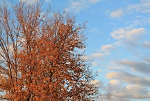 4 Seasons Photography / Capturing the essence of the 4 different seasons through photography. / by Maricris Guadagna