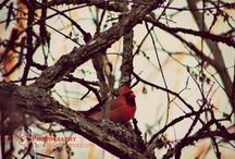 Bird Photography / by Maricris Guadagna