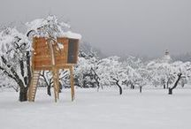 Tree House / by Deborah ~ REVAMP