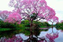 Arvores floridas / by Kalidi