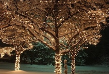 Wedding - Winter / by Tara Ray