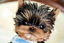 Pets | Animals | Domestic | Wild / by Star Padilla