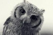Owls Who Give a Hoot / by Star Padilla