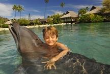 Activities / by Tahiti.com