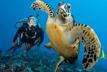 Diving / by Tahiti.com