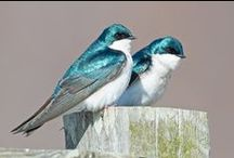 Birds / by Ginger Wirt