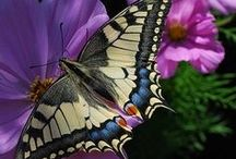 Butterfly's and Moths / by Ginger Wirt