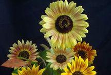 FLOWERS / by Bill Piniros