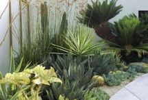 Desert Oasis Landscaping / Inspiration for creating a lush, but drought tolerant garden (for zone 8-9 desert) / by Science Martha
