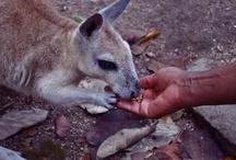 Animals around the world / by TripAdvisor