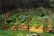 Gardening / by Beth Carey