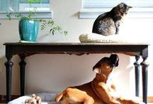 Pet Friendly Homes / by PetSafe Brand