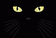 cat. / by CaroCaroOhOh