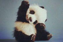 panda. / by CaroCaroOhOh