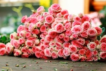 Flowers / by Suu P