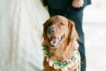 Wedding Dogs / by Jeannine @ Be Loved