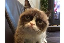 Grumpy Cat and Pokey / by Kassidy Cullen