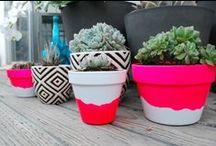 Backyard Ideas / by Stali Allport