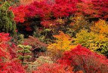 Autumn lovin' / by ally fenter