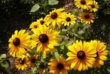Flowers / Gardening / by Susan Jones