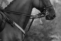 Equestrian / by Veda Sword