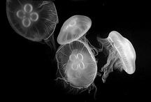 Jellyfish / by HIRO ISOZAKI