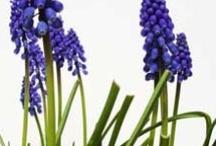 Garden Planning and Seeding / by Brenda Harmon