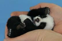 How cute. / by Cassie Bosma