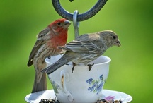 Birds / by Sue Hart-Somerville