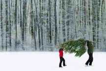 holiday cheer  / by Brenna Ziermann