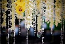 Wedding Ideas / by Desiree Dent