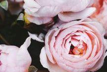 Florals / by Melanie Miller